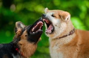 Mesa Dog Bite Lawyer