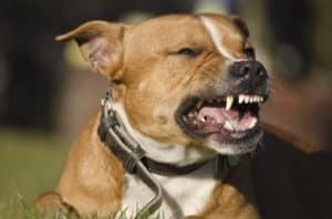Dog Bite Lawyer in Glendale AZ