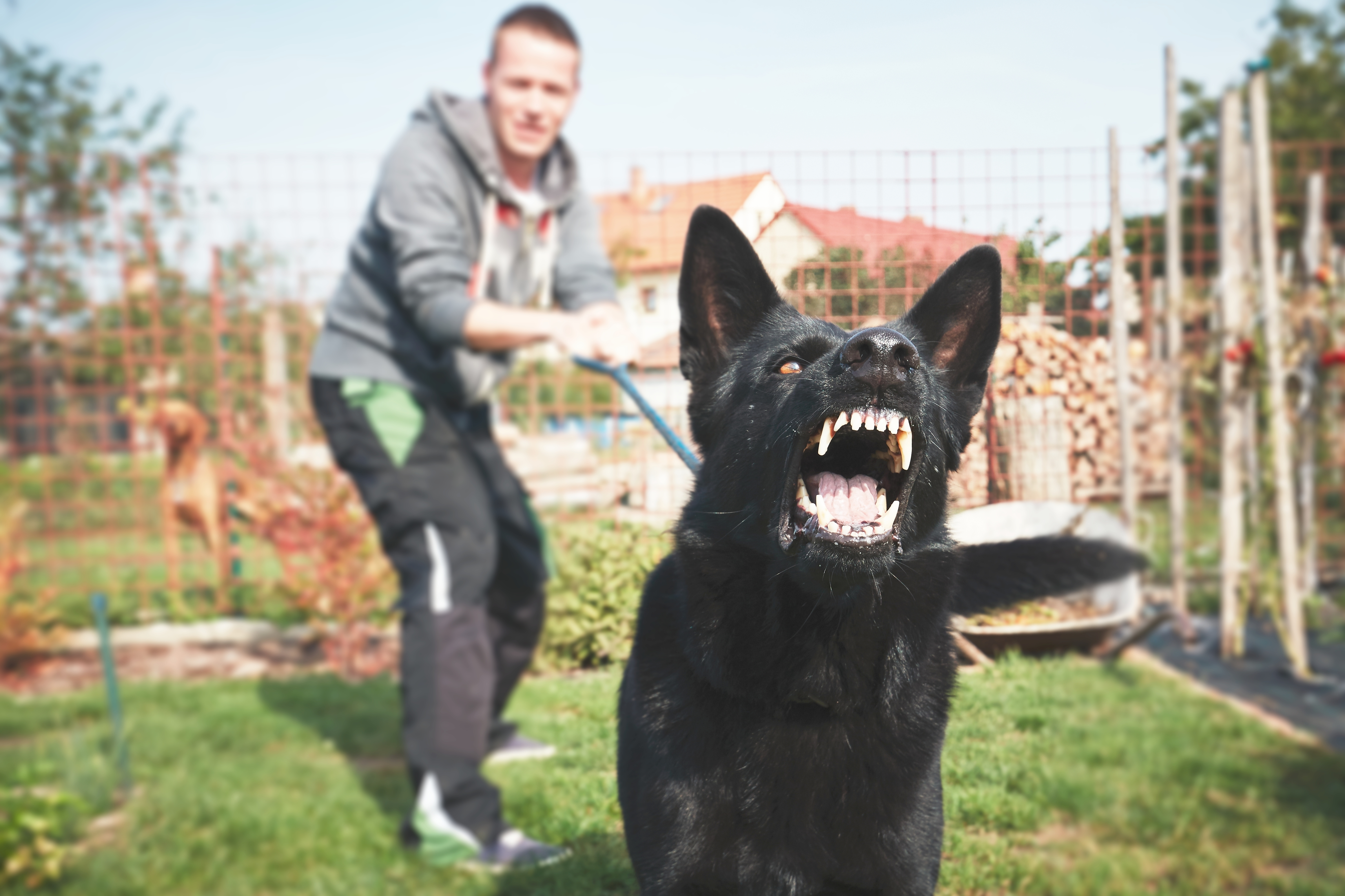 Is the Owner Liable? Here's What an Arizona Dog Bite Lawyer Would Tell You